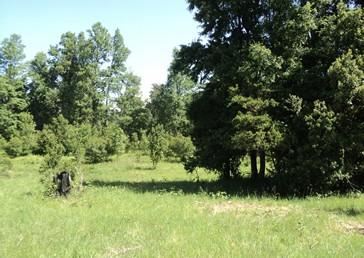 Pucon Se venden Parcelas de Agrado 4 hectáreas
